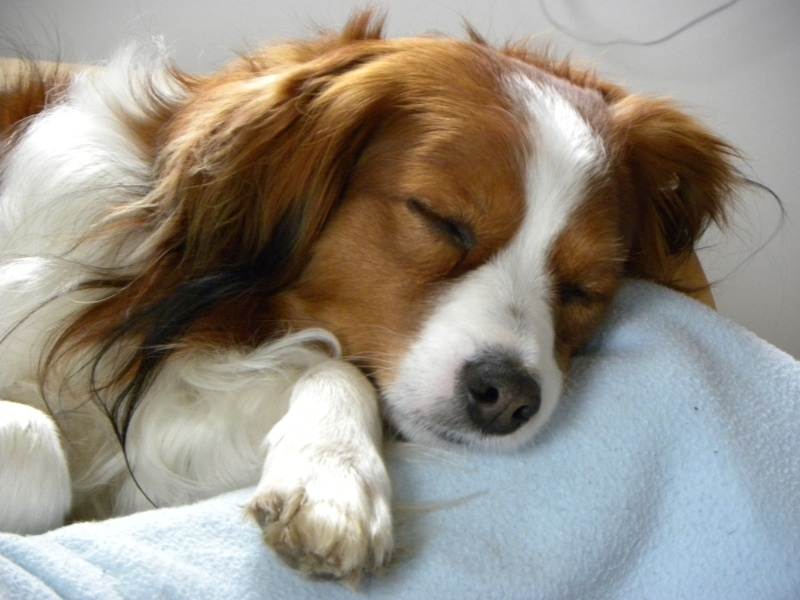 Cute Collie Dog Pictures